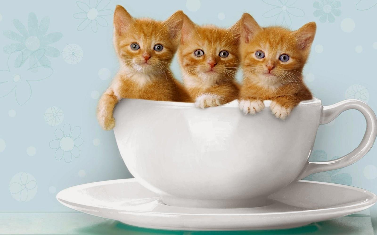 gambar hewan - foto kucing lucu bergerak