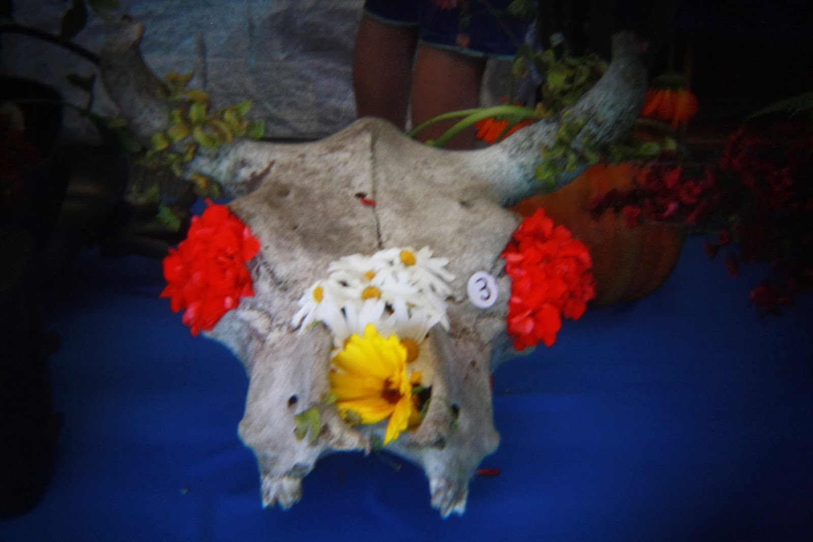 Flowers arranged in a sheep's scull.
