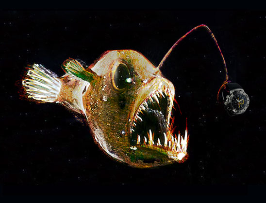 Anglerfish fishes for Where do angler fish live
