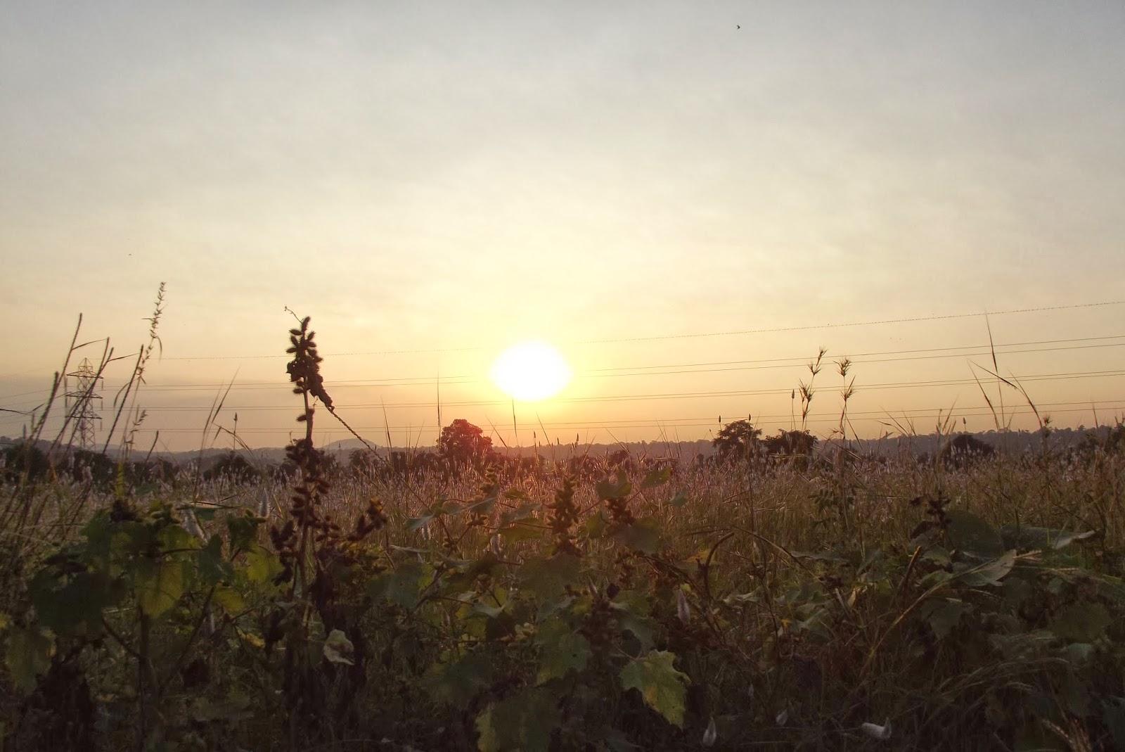 Glittering Golden Hour of Sunset