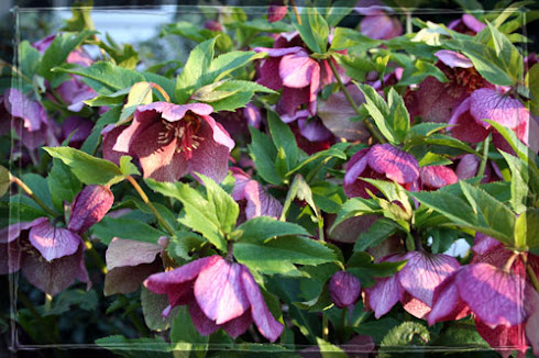 Perennial Color for Shade Gardens