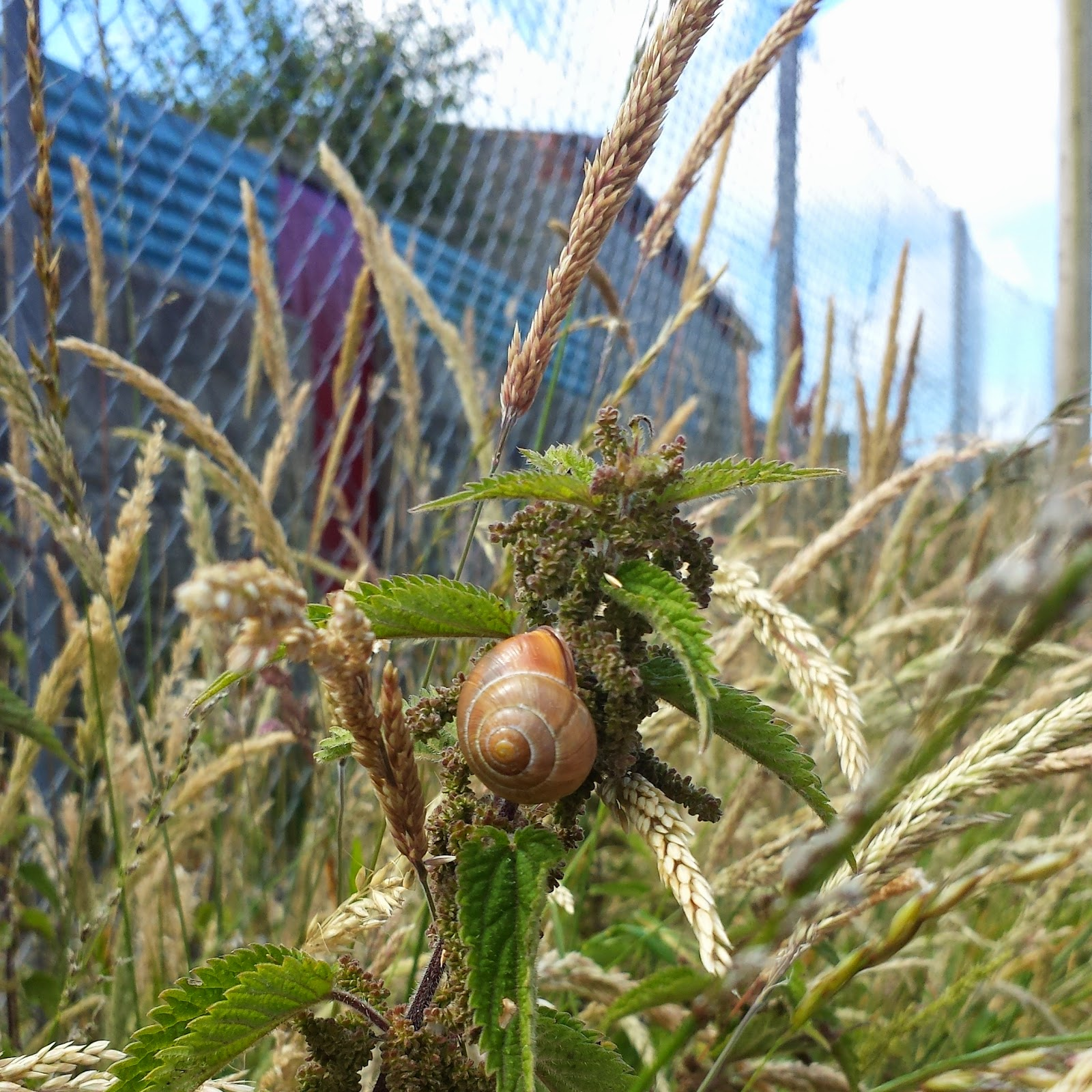 Snail in nettles
