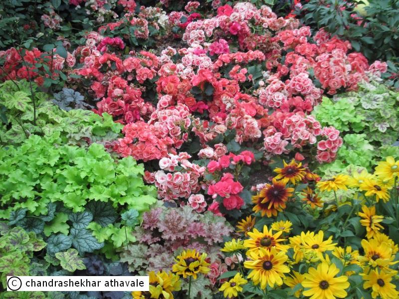 Akshardhool Travels Singapore S Gardens By The Bay