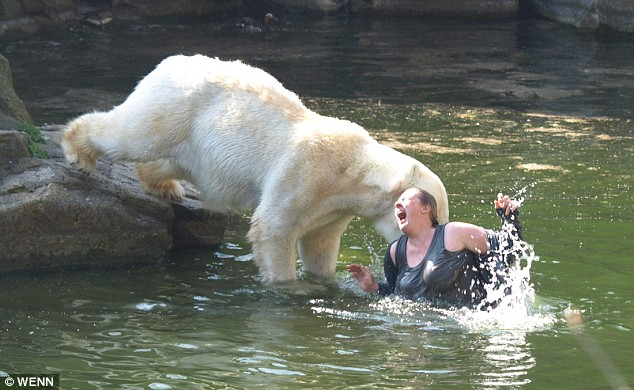 Pictured: Shocking moment polar bear attacks woman who climbed into zoo enclosure