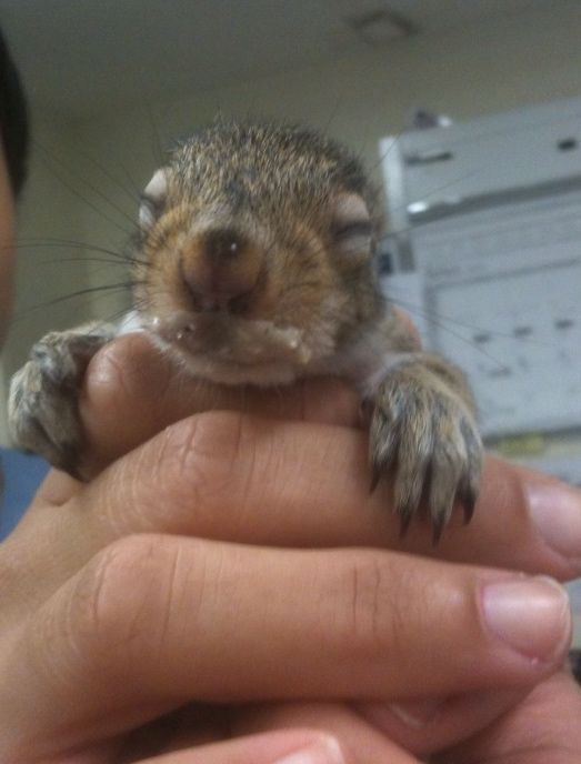 Бельчонок / Baby Squirrel
