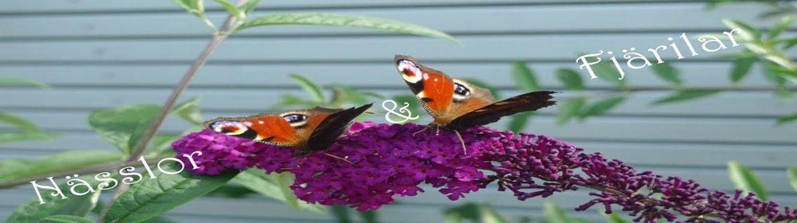 nässlor och fjärilar