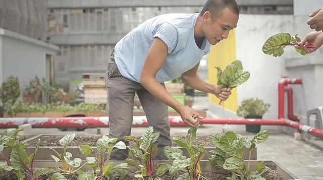 Jovens plantam na cobertura de prédio em Hong Kong