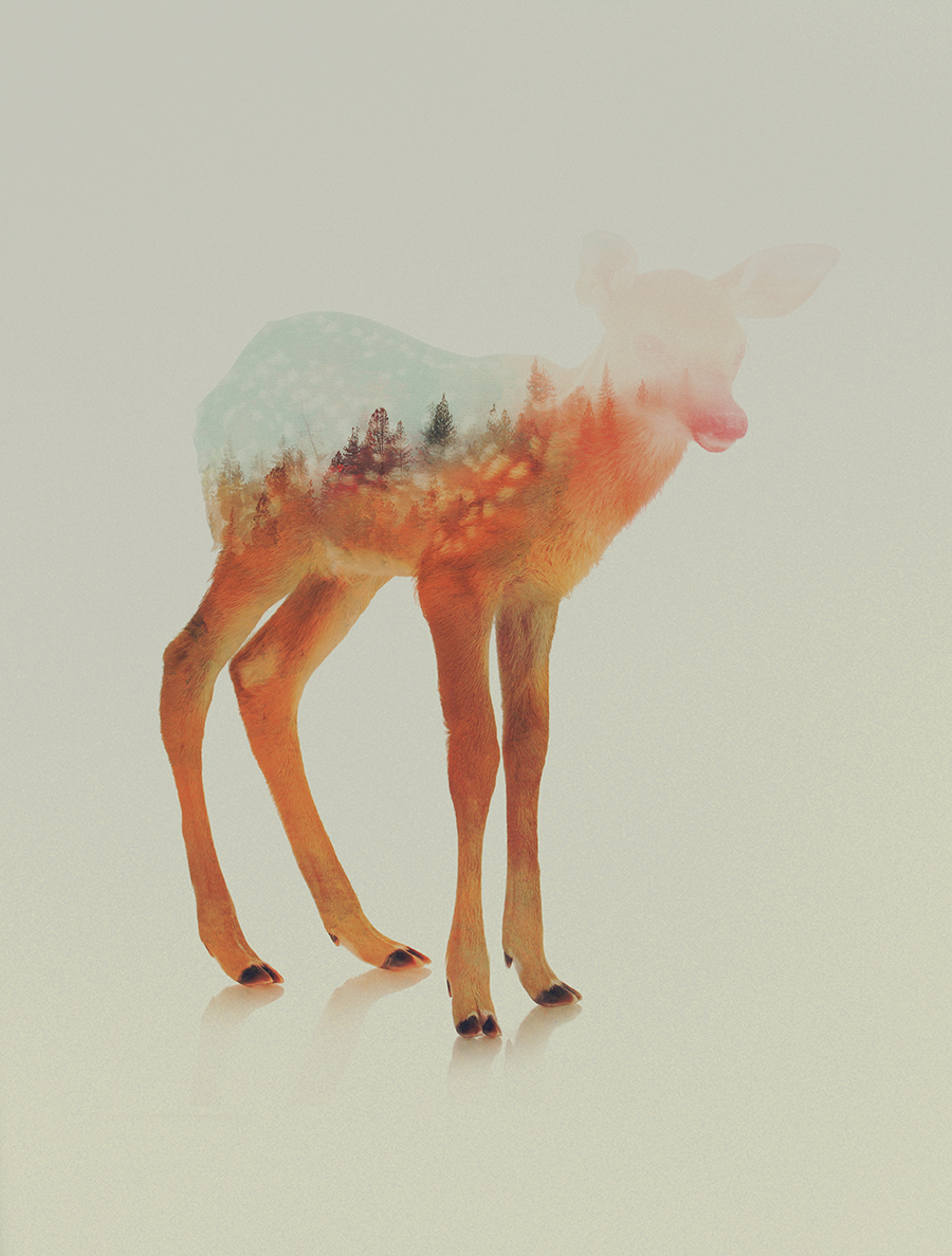 03-Fawn-Andreas-Lie-Animals-in-Photographic-Double-Exposures-www-designstack-co