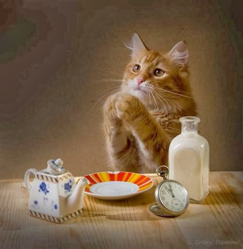 Gambar-Gambar Kucing Menggemaskan
