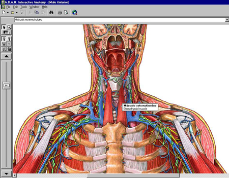 ADAM Education - Now Live… A.D.A.M. Interactive Anatomy ...