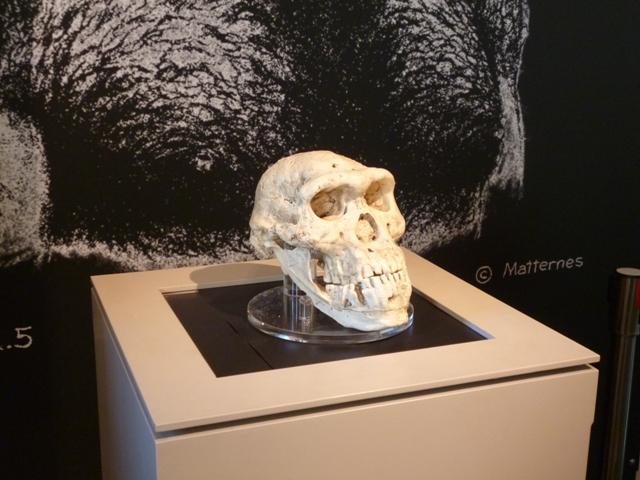 Restos humanos del yacimiento de Dmanisi