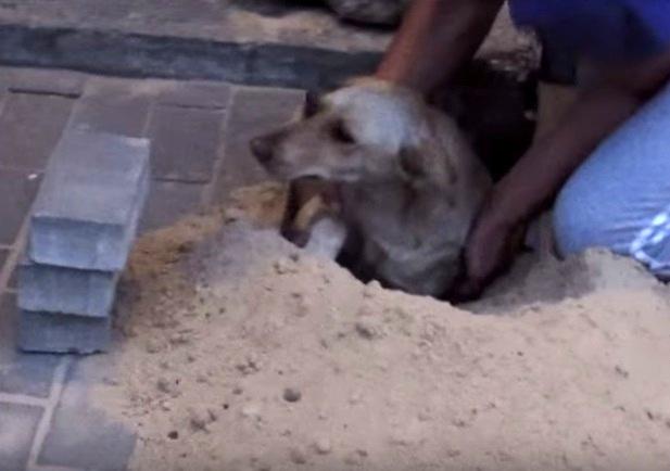 perra enterrada embarazada enterrada viva en plena calle