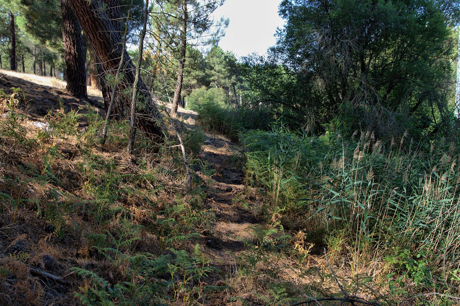 pinar-arroyo