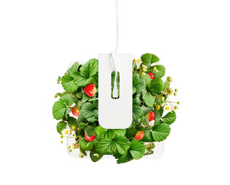 Macetero Smartpot plantas aromáticas con tan solo un clic