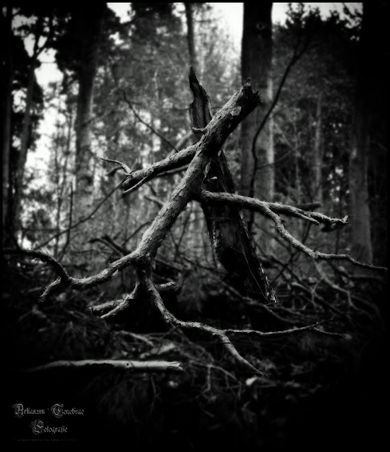 Geäst im Wald