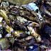 Cá bống vùi tro đặc sản Lai Châu nức tiếng