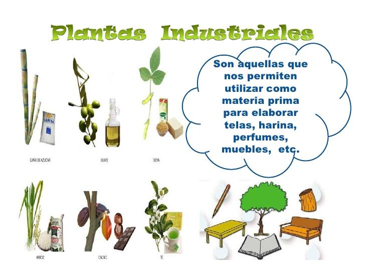 Image gallery plantas industriales for Clasificacion de las plantas ornamentales