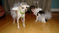 Angel Dog Costumes