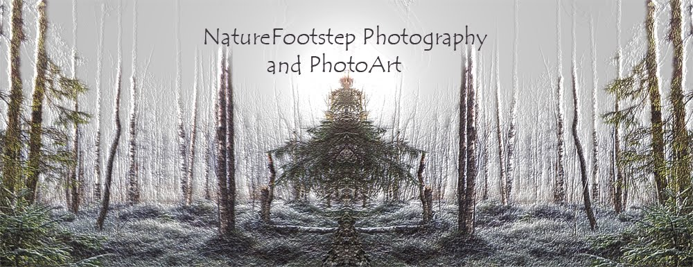 NatureFootstep PhotoArt