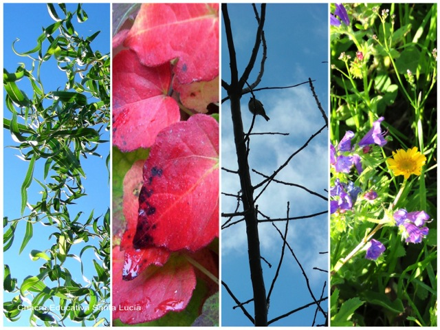 Verano - Otoño - Invierno - Primavera - Chacra Educativa Santa Lucía