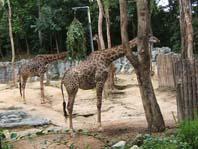 งานพิเศษ, ท่องเที่ยวเชียงใหม่, รายได้เสริม, สวนสัตว์เชียงใหม่