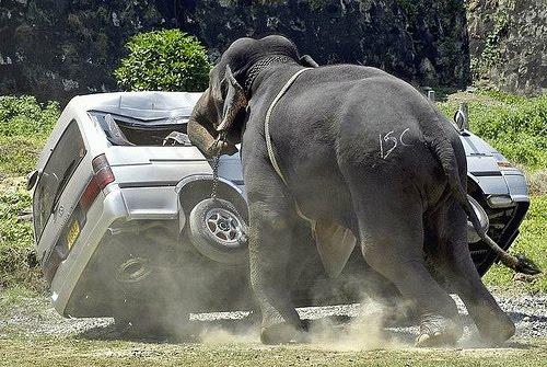 Gajah Ngamuk