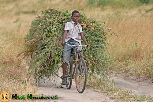 Bicicleta para Carregar Palha