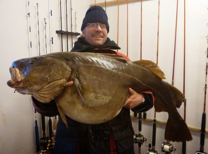 Big fishes of the world cod atlantic page 2 for What is the biggest fish ever caught