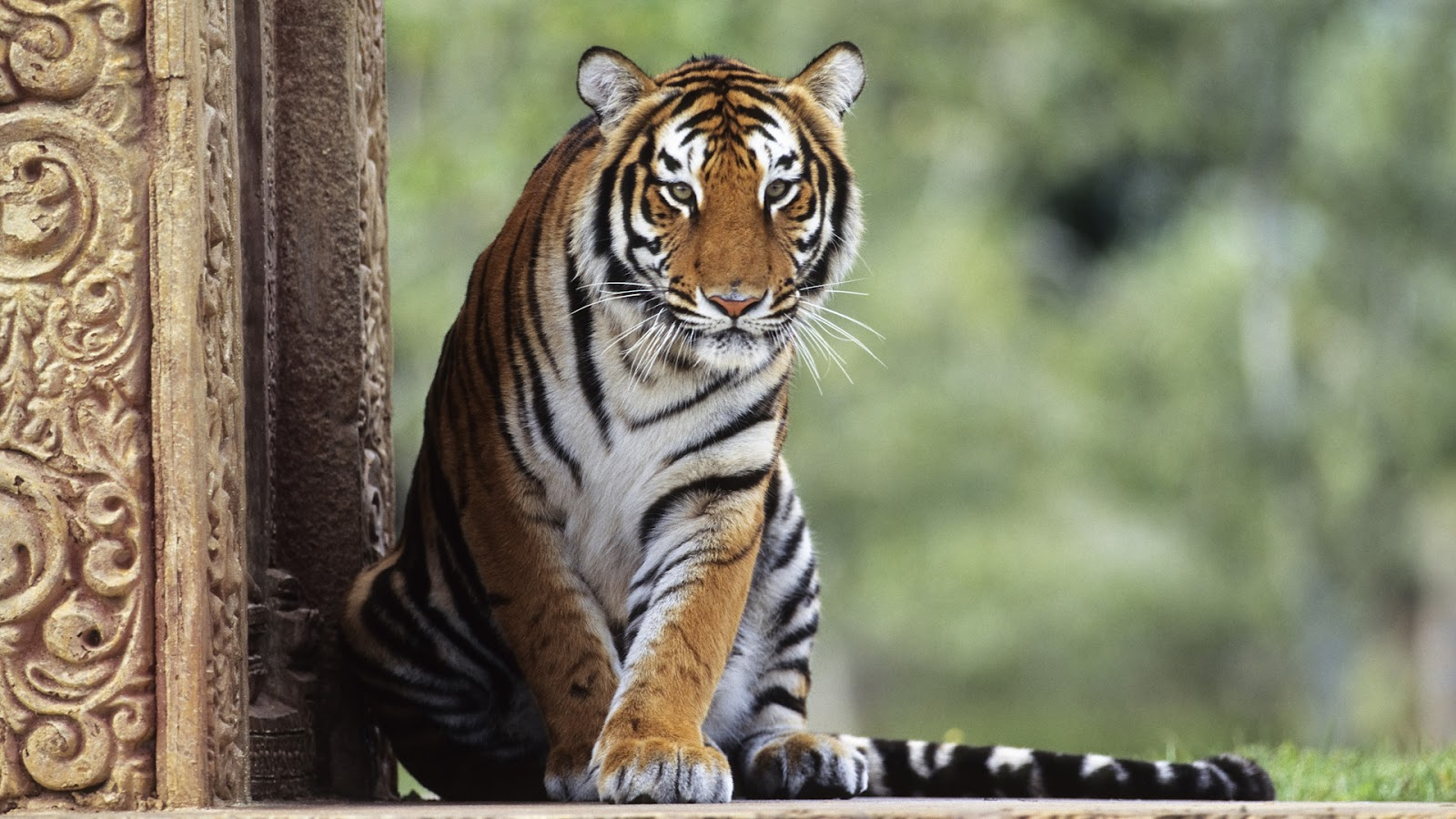 1001places: amazing animals - wallpapers full hd