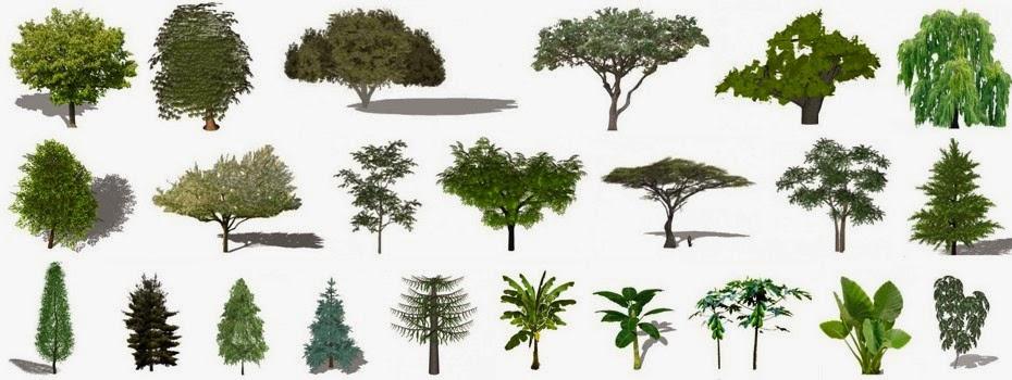 Arquitetura com sketchup arquivo plantas rvores e for Different types of plants and trees