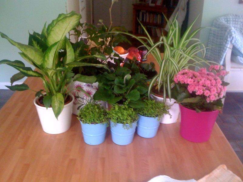 my little bit of green the joy of houseplants