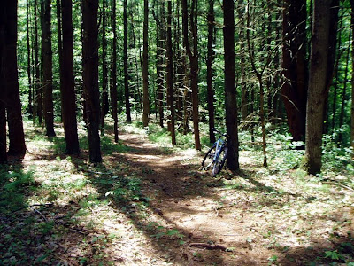 Single track through pines on the K-P parcel, Saratoga County Forest.   The Saratoga Skier and Hiker, first-hand accounts of adventures in the Adirondacks and beyond, and Gore Mountain ski blog.