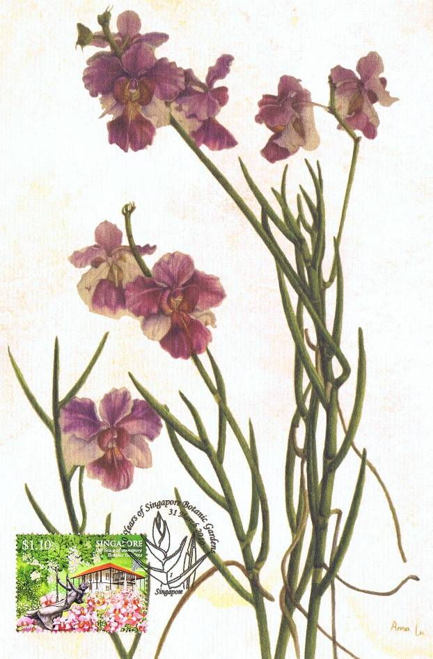 The Vanda Miss Joaquim is an orchid hybrid between Vanda hookeriana and Vanda teres.