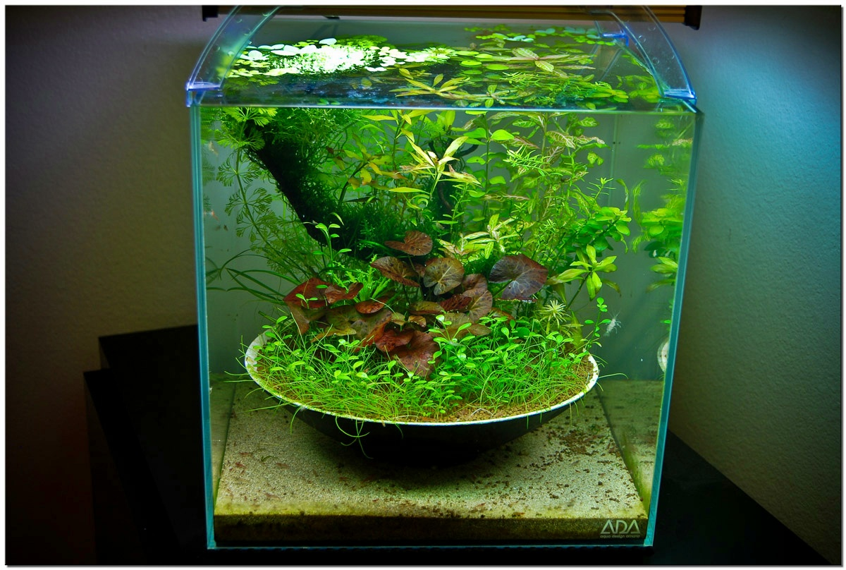 apa itu aquascape aquascape adalah seni menata taman didalam aquarium ...