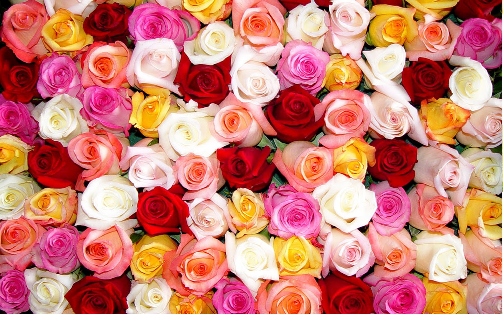 Roses And Flowers Desktop Wallpaper
