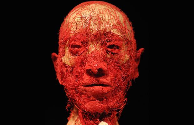 Human Bodies - Exposição