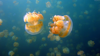 Download Underwater Jellyfish Wallpapers