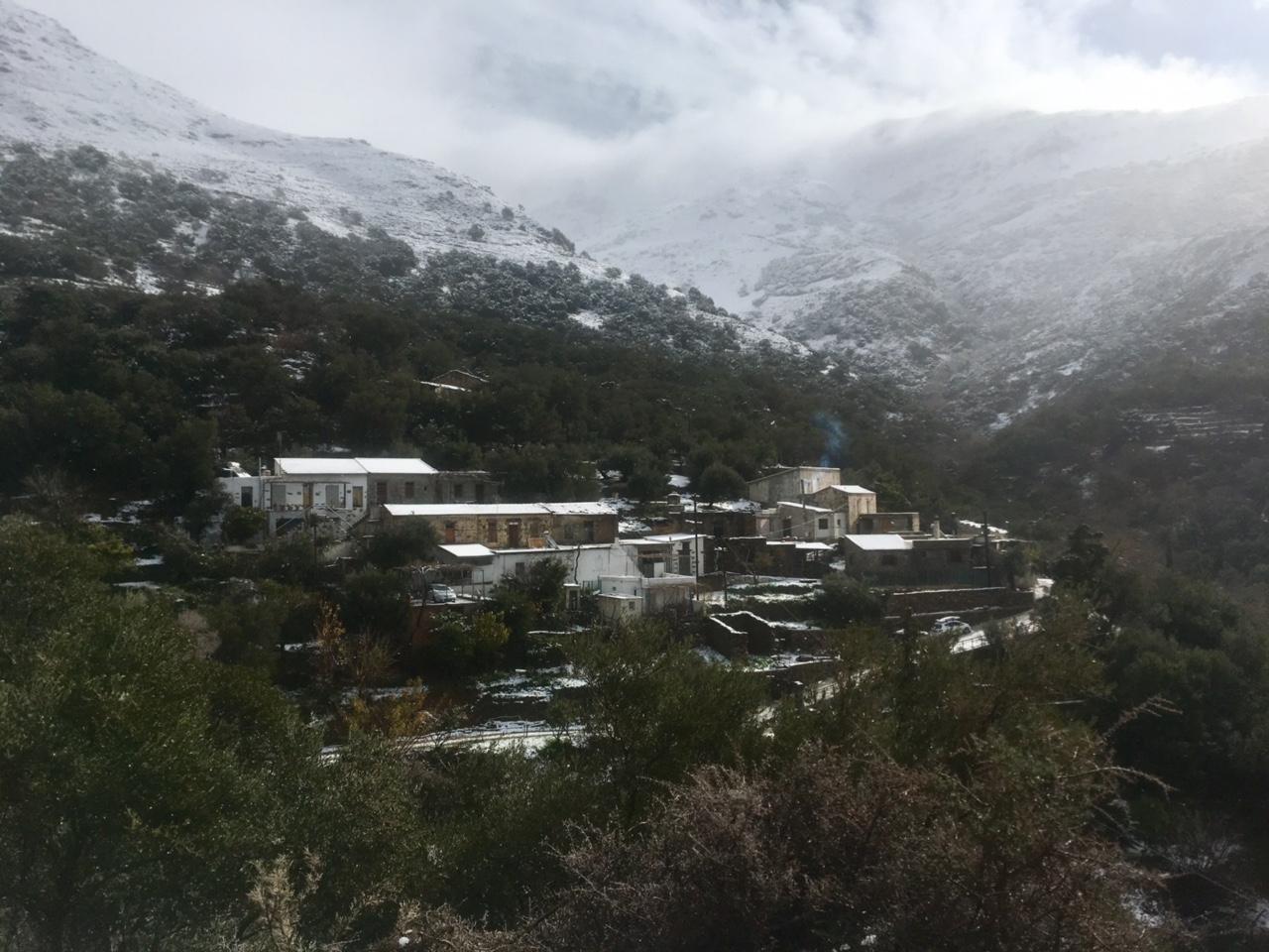 Τζιτζιφιά χιονισμένη 2