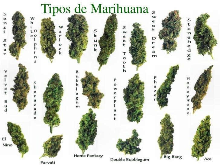 tipos de matas de marihuanas