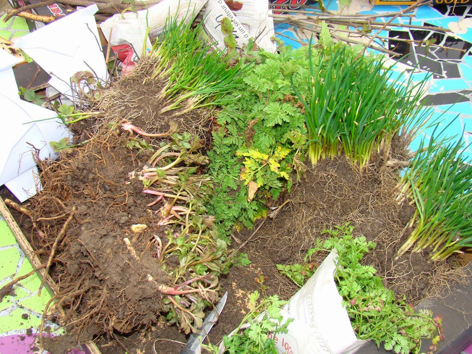 Le jardin d 39 aubeyrat troc aux plantes le 19 mars 2016 for Jardin aux plantes