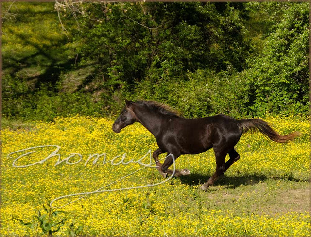 Photo of horese running in field, assignment photo by thomas haynes