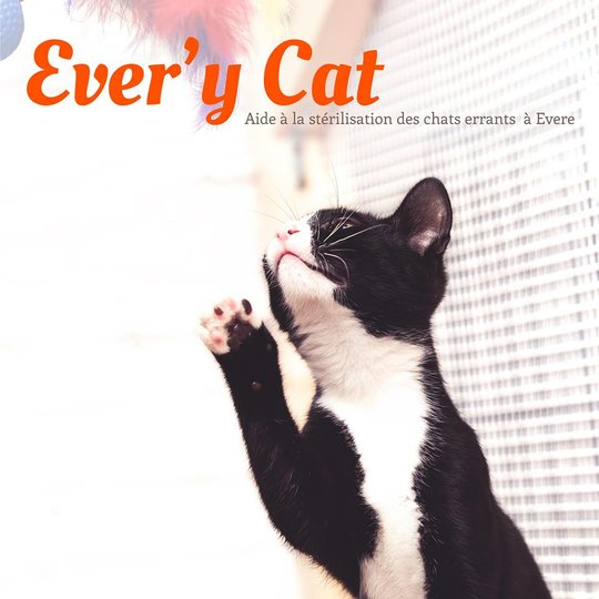 ever'y cat rescue