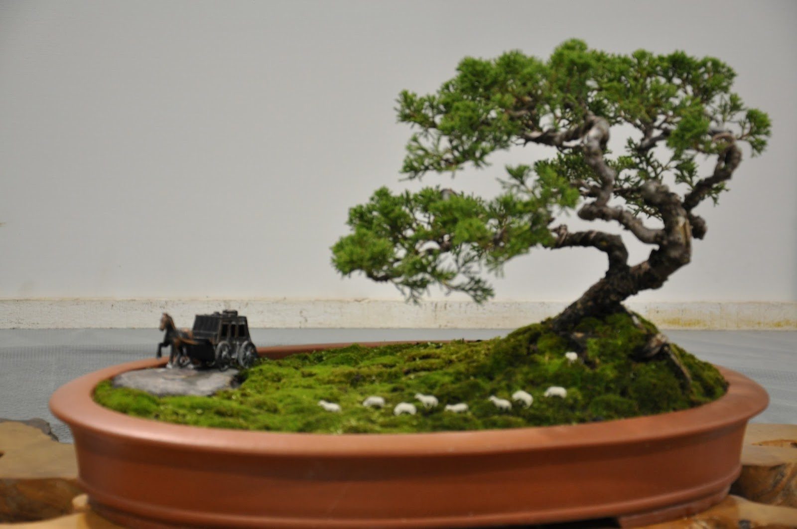All In One Bonsai And Ceramics Taiwan Bonsai Exhibitions