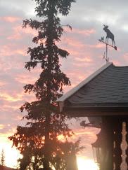 VærElg i solnedgang