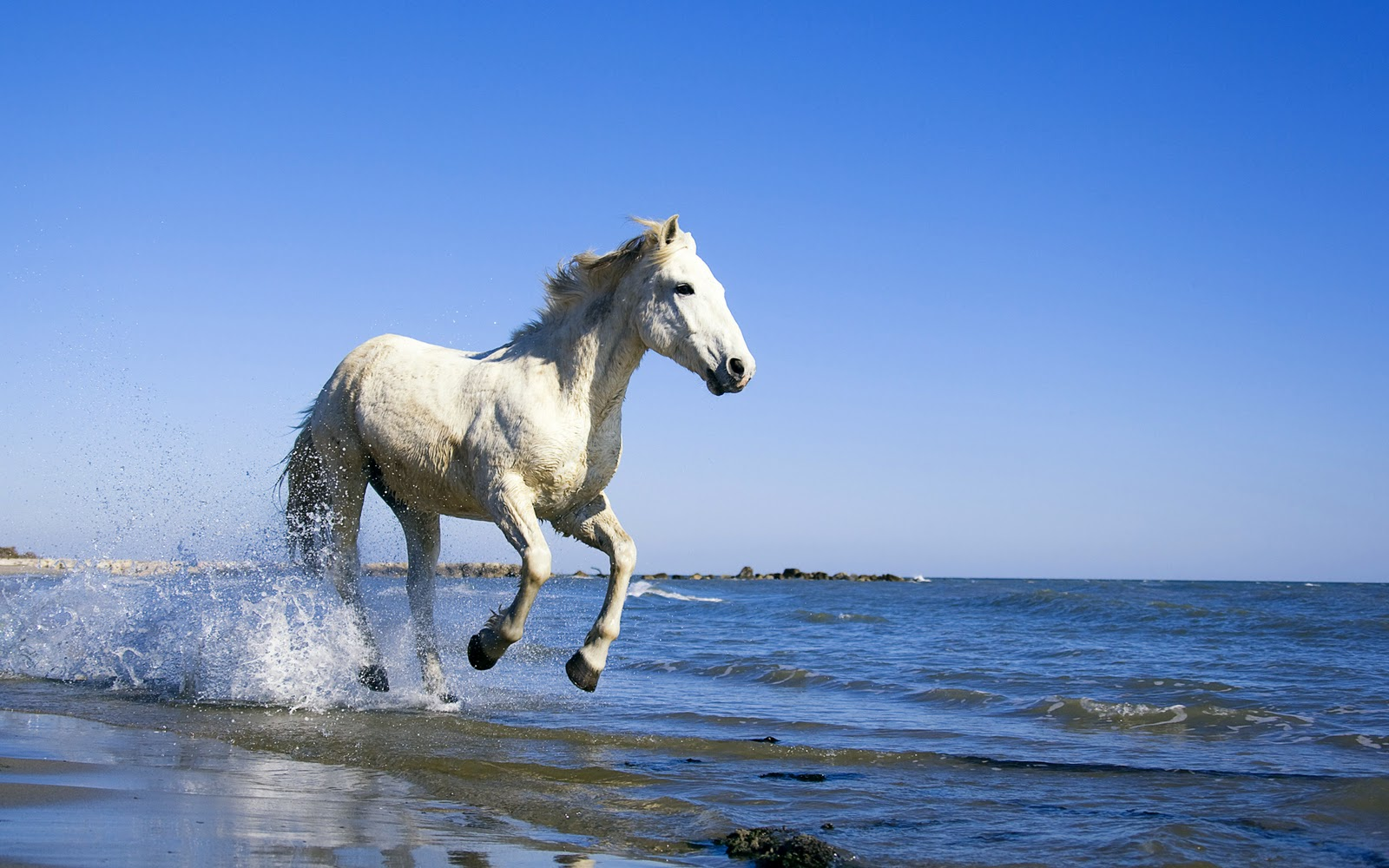 Great   Wallpaper Horse Lightning - Horses+Wallpapers+1920x1200  Perfect Image Reference_95839.jpg