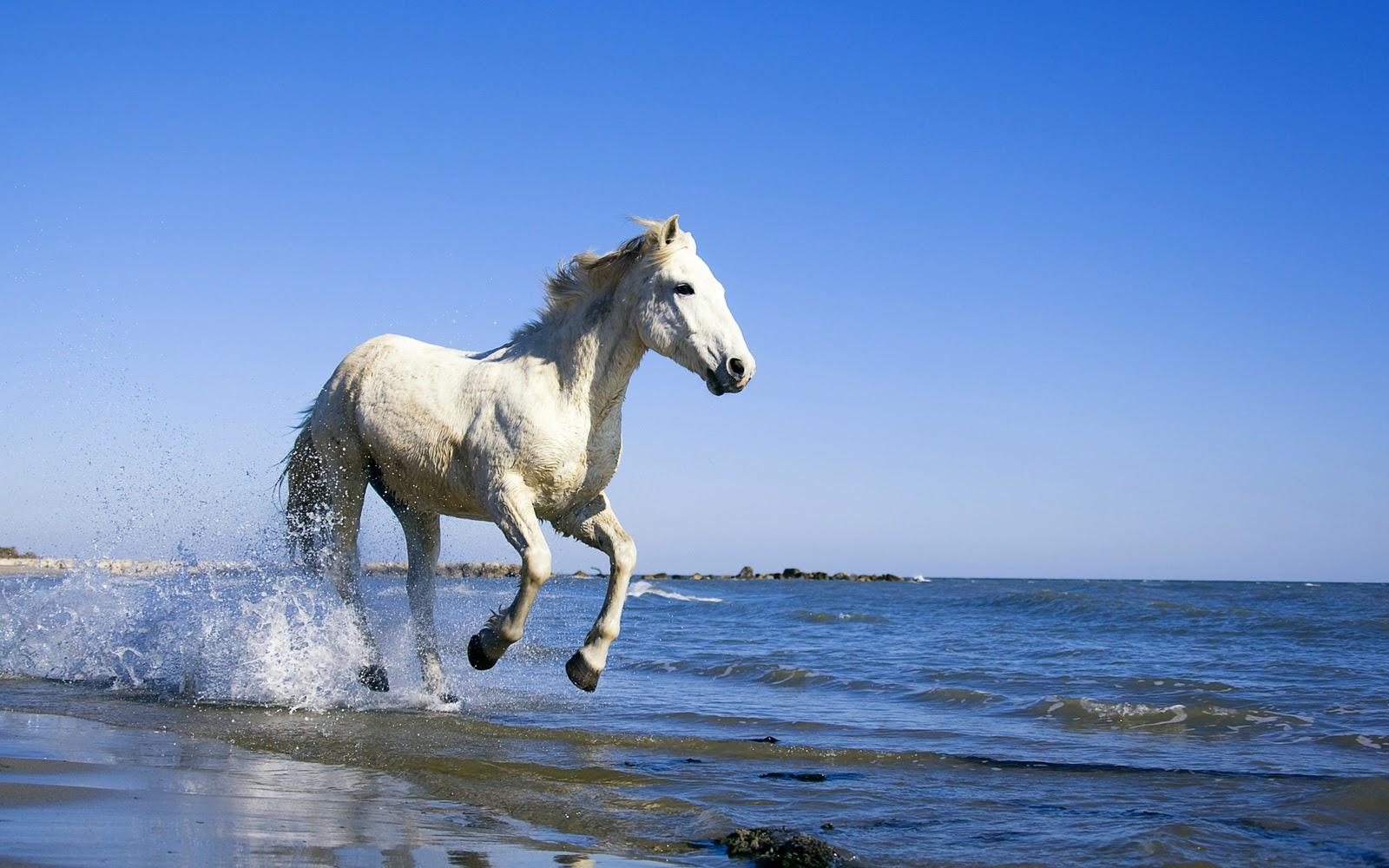 Simple   Wallpaper Horse Ultra Hd - Horses+Wallpapers+1920x1200  Image_628821.jpg