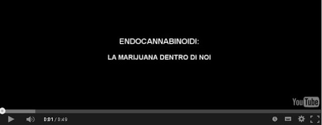 http://caosvideo.it/v/gli-endocannabinoidi-la-marijuana-dentro-di-noi-10495