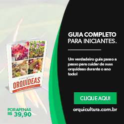 GUIA DEFINITIVO - ARQUÍDIAS PARA INICIANTES