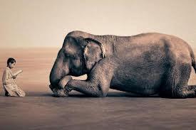 Garoto lendo livro cuidadosamente para elefante deitado olhando pra ele.