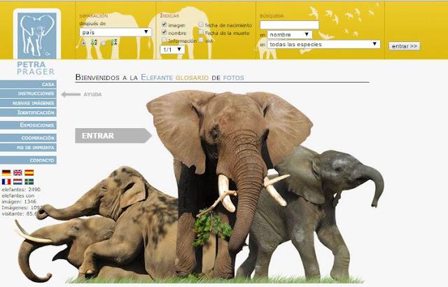 http://www.elefanten-fotolexikon.eu/index.php?seite=startseite